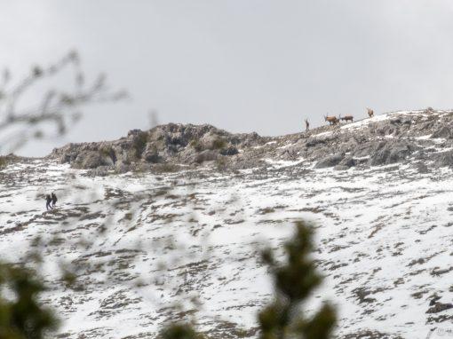 Tirol Splitter |  Hahntennjoch