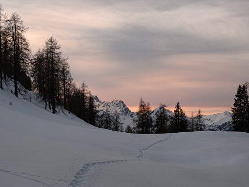 Tirol Splitter 14.01.2020 | Von Dormitz zur Simmering Alm