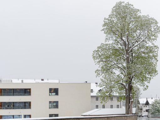 Tirol Splitter 03.05.2021 | Die Linde wurde gefällt und ist aus dem Dorfbild verschwunden.